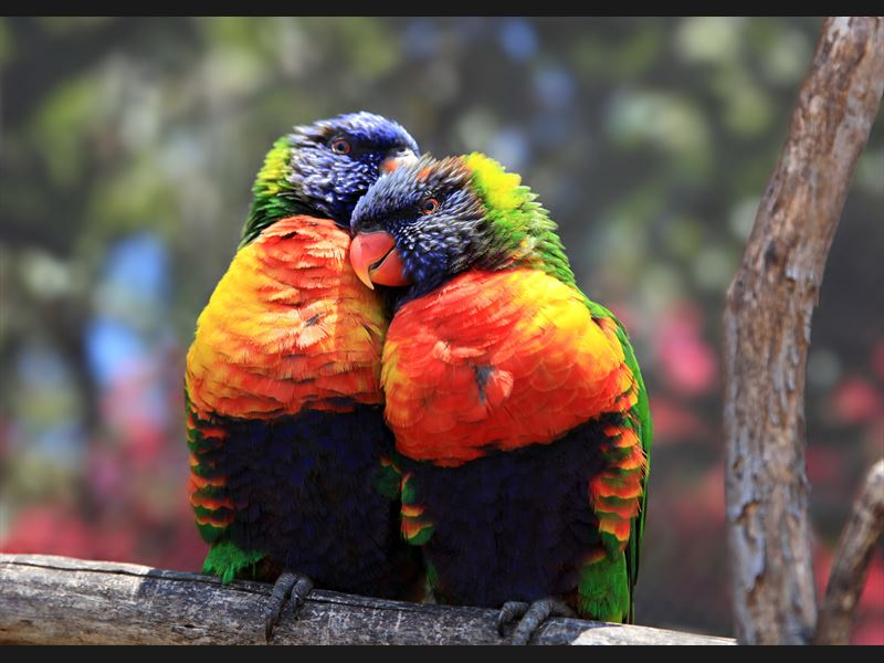 Birds in love - USA - California